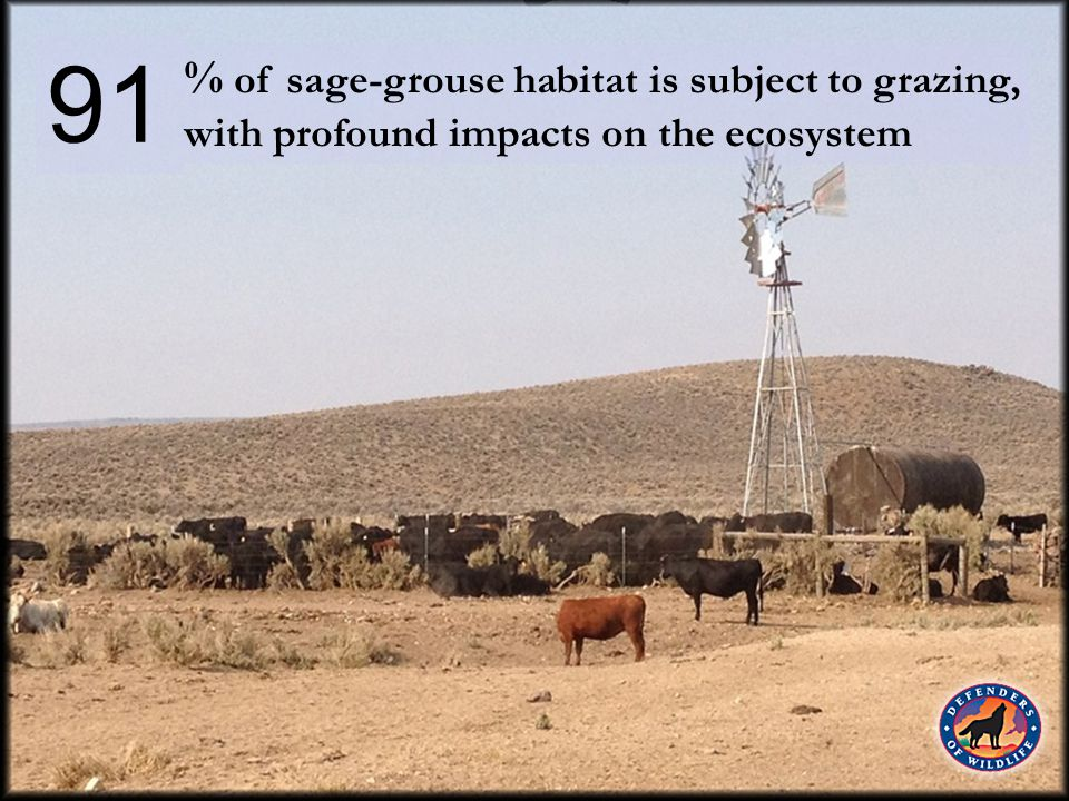 % of sagebrush invaded by cheatgrass, which renders habitat virtually worthless to sage-grouse 50