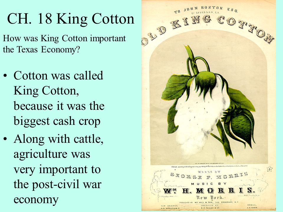CH. 18 King Cotton Cotton was called King Cotton, because it was the biggest cash crop Along with cattle, agriculture was very important to the post-c