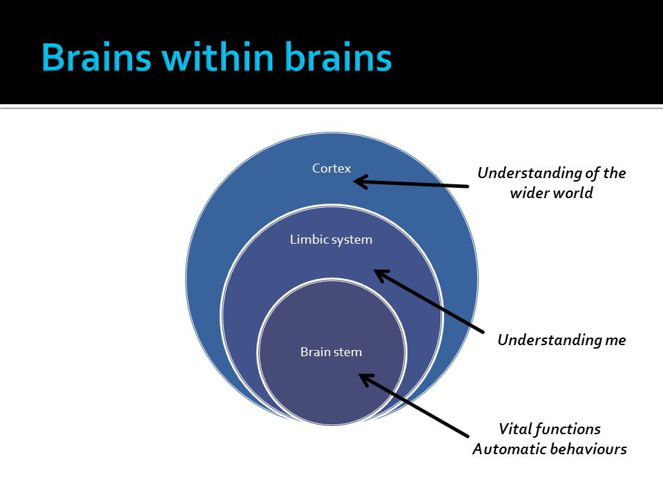 Cortex Limbic system Brain stem Vital functions Automatic behaviours Understanding me Understanding of the wider world