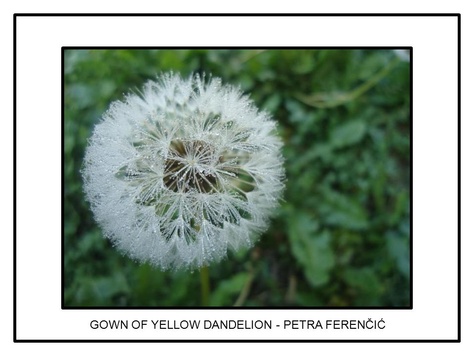 GOWN OF YELLOW DANDELION - PETRA FERENČIĆ