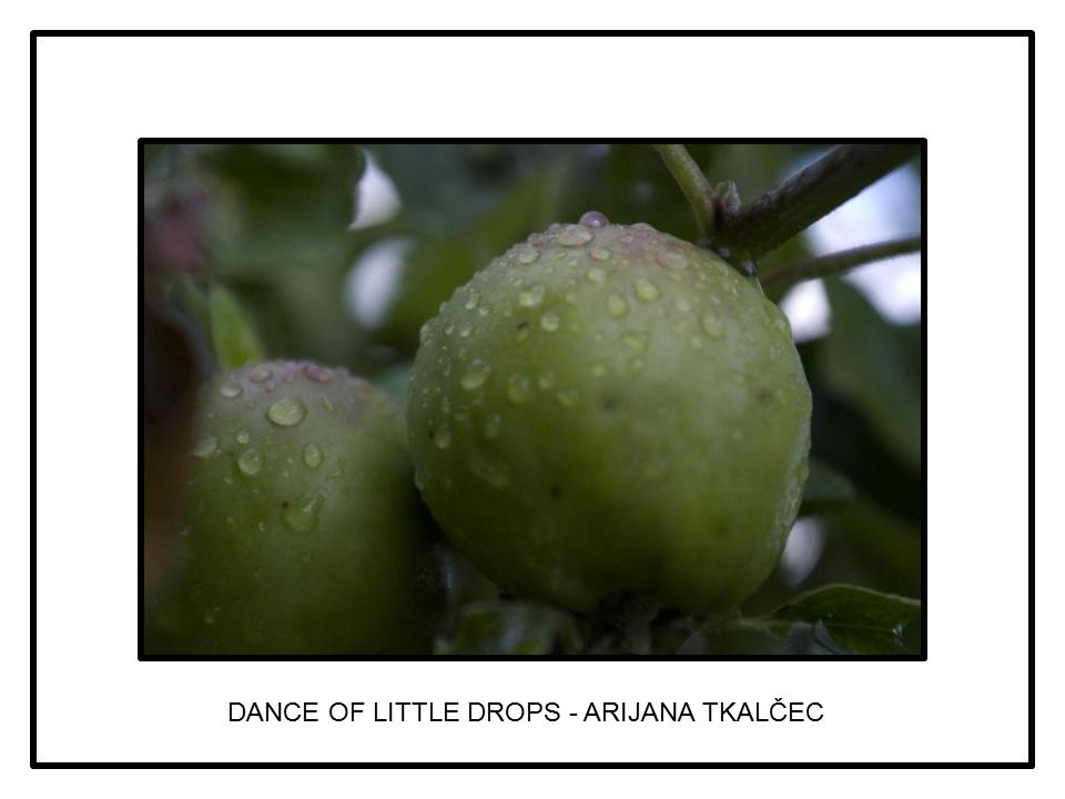 DANCE OF LITTLE DROPS - ARIJANA TKALČEC