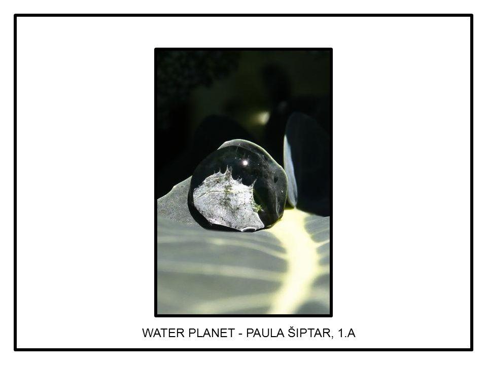 WATER PLANET - PAULA ŠIPTAR, 1.A