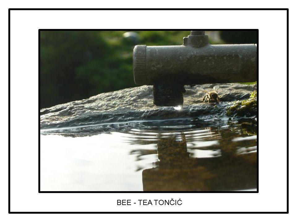 BEE - TEA TONČIĆ