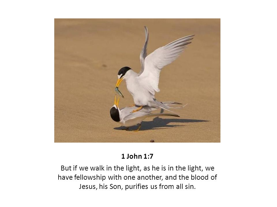 1 John 1:7 But if we walk in the light, as he is in the light, we have fellowship with one another, and the blood of Jesus, his Son, purifies us from all sin.