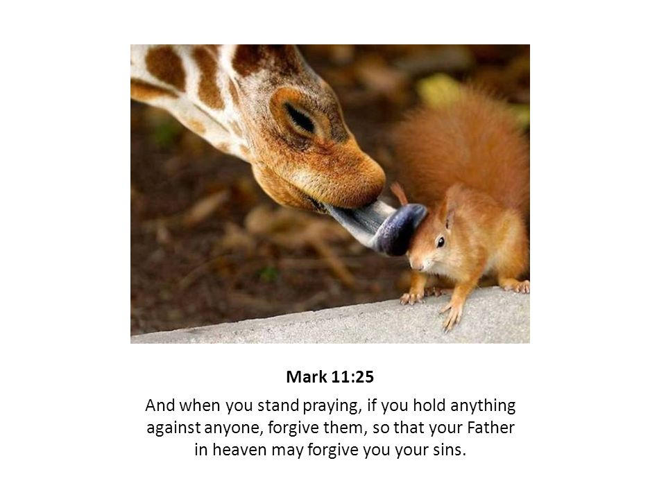 Mark 11:25 And when you stand praying, if you hold anything against anyone, forgive them, so that your Father in heaven may forgive you your sins.