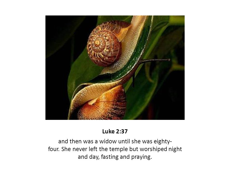 Luke 2:37 and then was a widow until she was eighty- four. She never left the temple but worshiped night and day, fasting and praying.