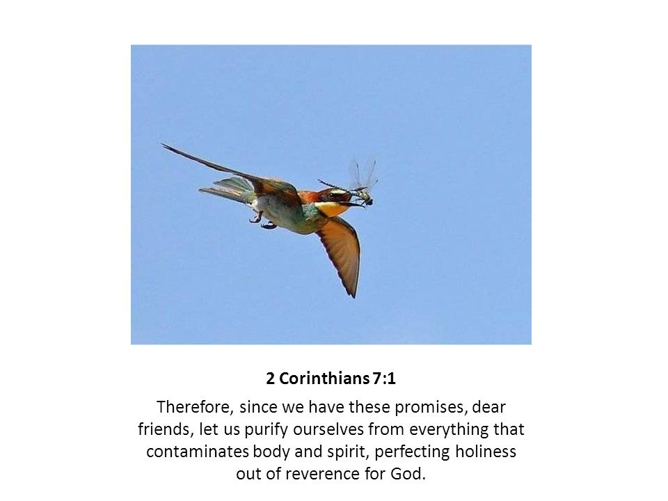 2 Corinthians 7:1 Therefore, since we have these promises, dear friends, let us purify ourselves from everything that contaminates body and spirit, perfecting holiness out of reverence for God.