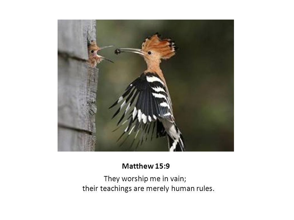 Matthew 15:9 They worship me in vain; their teachings are merely human rules.