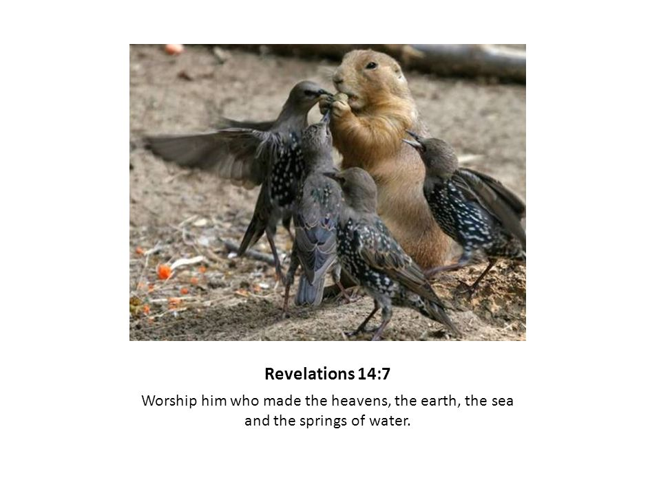 Revelations 14:7 Worship him who made the heavens, the earth, the sea and the springs of water.