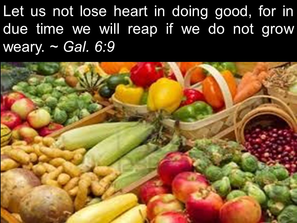 Let us not lose heart in doing good, for in due time we will reap if we do not grow weary. ~ Gal. 6:9