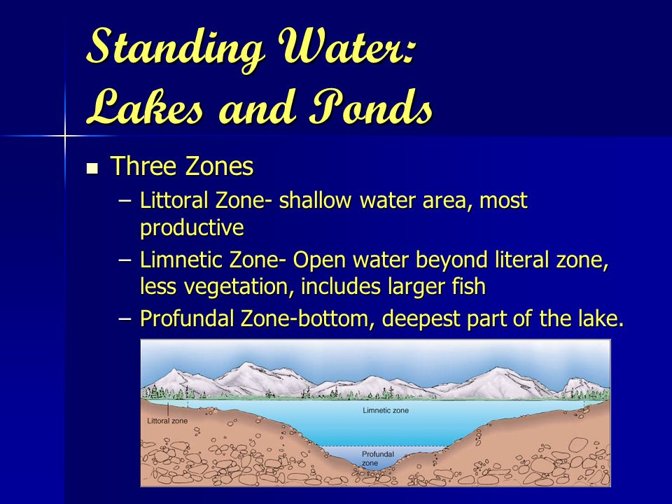 Standing Water: Lakes and Ponds Three Zones Three Zones –Littoral Zone- shallow water area, most productive –Limnetic Zone- Open water beyond literal zone, less vegetation, includes larger fish –Profundal Zone-bottom, deepest part of the lake.