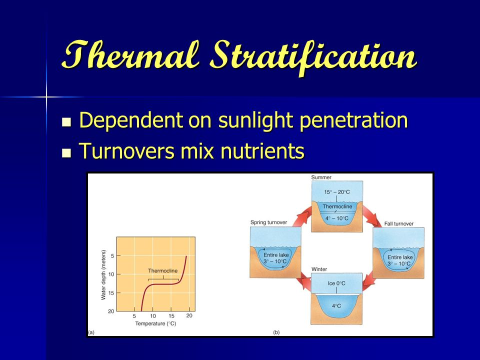 Thermal Stratification Dependent on sunlight penetration Dependent on sunlight penetration Turnovers mix nutrients Turnovers mix nutrients