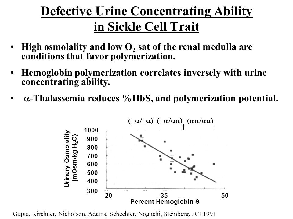 Defective Urine Concentrating Ability in Sickle Cell Trait High osmolality and low O 2 sat of the renal medulla are conditions that favor polymerizati