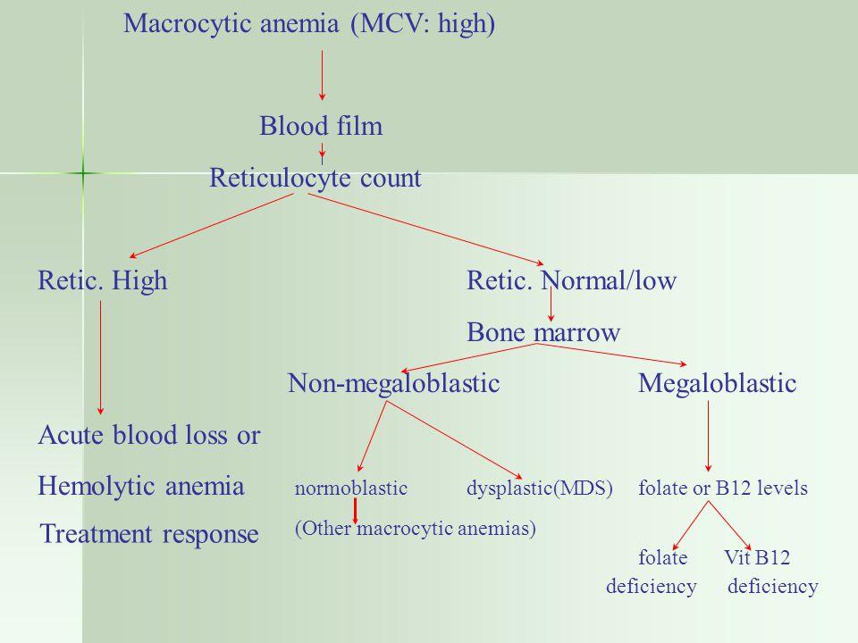 Macrocytic anemia (MCV: high) Blood film Reticulocyte count Retic.