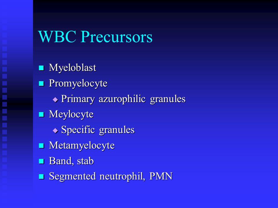 WBC Precursors Myeloblast Myeloblast Promyelocyte Promyelocyte  Primary azurophilic granules Meylocyte Meylocyte  Specific granules Metamyelocyte Metamyelocyte Band, stab Band, stab Segmented neutrophil, PMN Segmented neutrophil, PMN