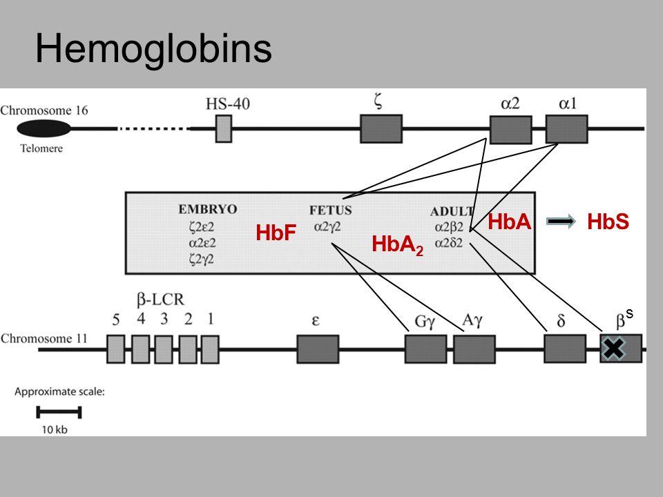 Hemoglobins Single base pair mutation results in a single amino acid change.