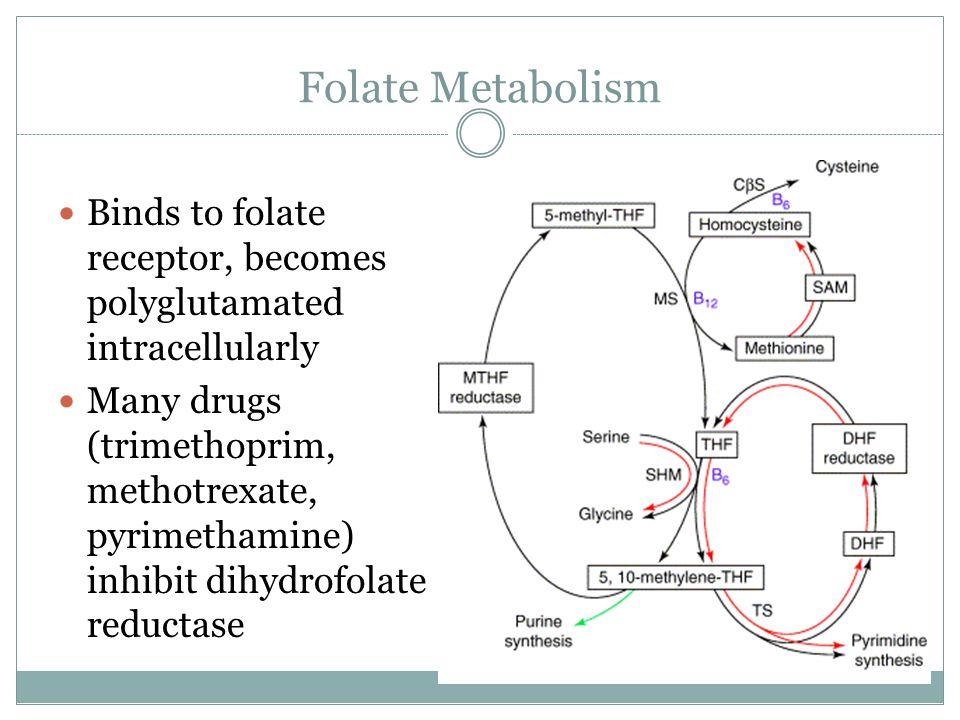 Folate Metabolism Binds to folate receptor, becomes polyglutamated intracellularly Many drugs (trimethoprim, methotrexate, pyrimethamine) inhibit dihydrofolate reductase