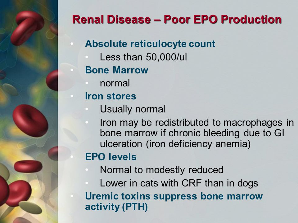 Renal Disease – Poor EPO Production Absolute reticulocyte count Less than 50,000/ul Bone Marrow normal Iron stores Usually normal Iron may be redistributed to macrophages in bone marrow if chronic bleeding due to GI ulceration (iron deficiency anemia) EPO levels Normal to modestly reduced Lower in cats with CRF than in dogs Uremic toxins suppress bone marrow activity (PTH)