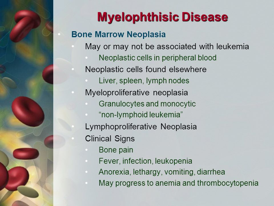 Myelophthisic Disease Bone Marrow Neoplasia May or may not be associated with leukemia Neoplastic cells in peripheral blood Neoplastic cells found elsewhere Liver, spleen, lymph nodes Myeloproliferative neoplasia Granulocytes and monocytic non-lymphoid leukemia Lymphoproliferative Neoplasia Clinical Signs Bone pain Fever, infection, leukopenia Anorexia, lethargy, vomiting, diarrhea May progress to anemia and thrombocytopenia