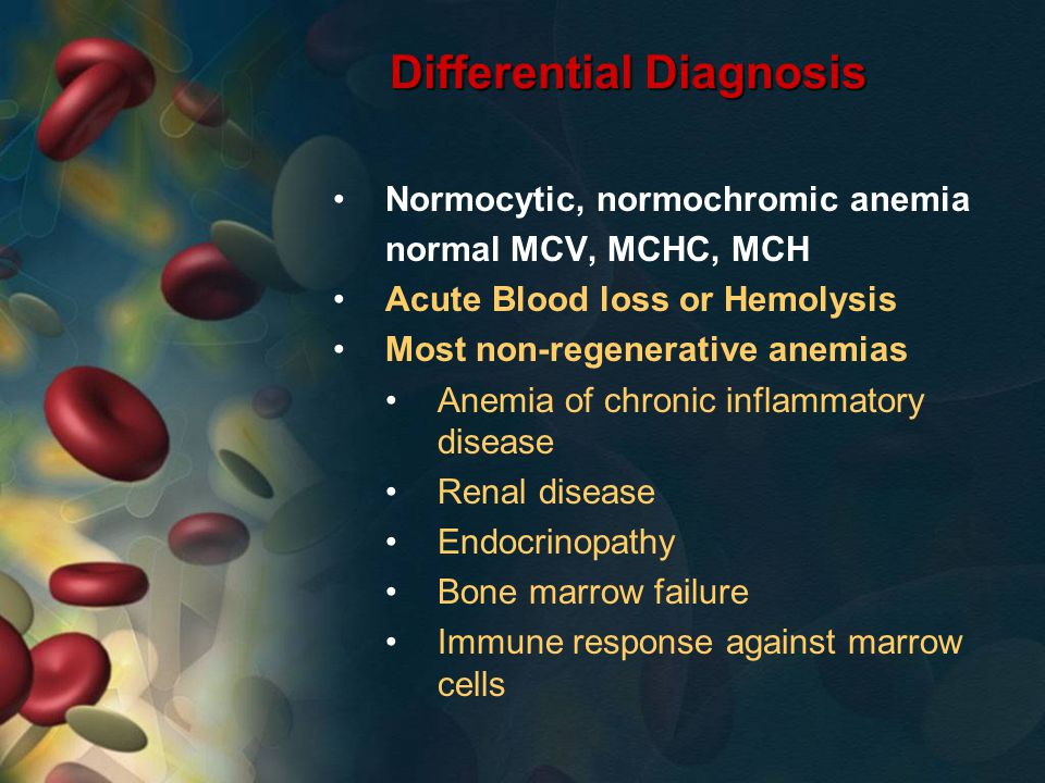 Differential Diagnosis Normocytic, normochromic anemia normal MCV, MCHC, MCH Acute Blood loss or Hemolysis Most non-regenerative anemias Anemia of chronic inflammatory disease Renal disease Endocrinopathy Bone marrow failure Immune response against marrow cells