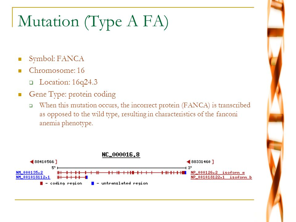 Mutation (Type A FA) Symbol: FANCA Chromosome: 16  Location: 16q24.3 Gene Type: protein coding  When this mutation occurs, the incorrect protein (FANCA) is transcribed as opposed to the wild type, resulting in characteristics of the fanconi anemia phenotype.