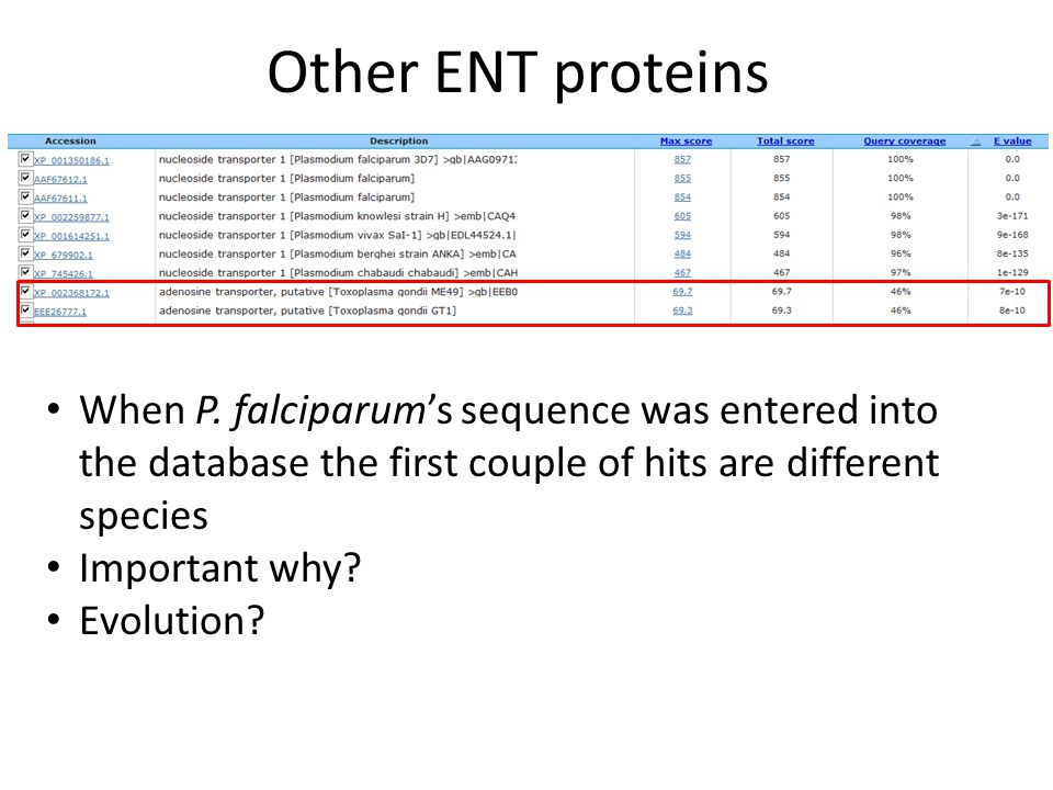 Other ENT proteins When P. falciparum's sequence was entered into the database the first couple of hits are different species Important why? Evolution