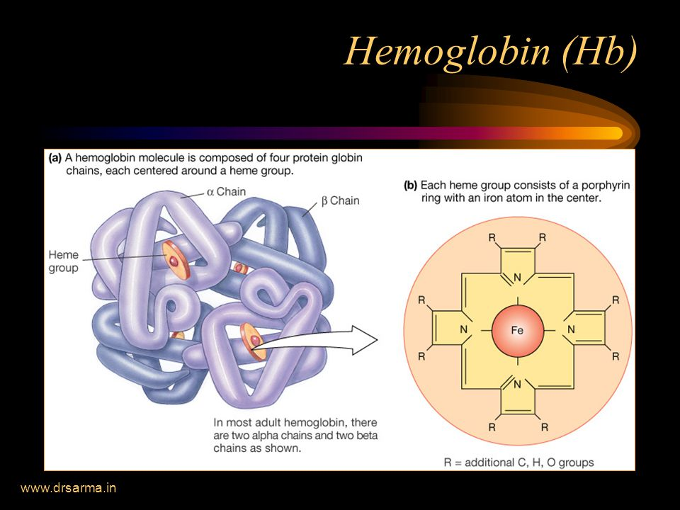 www.drsarma.in Hemoglobin (Hb)