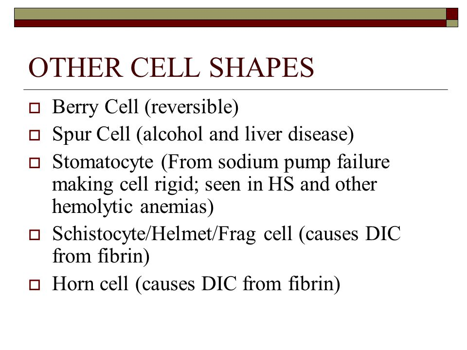 OTHER CELL SHAPES  Berry Cell (reversible)  Spur Cell (alcohol and liver disease)  Stomatocyte (From sodium pump failure making cell rigid; seen in