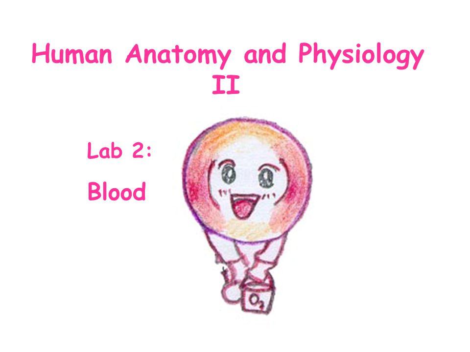 Human Anatomy and Physiology II Lab 2: Blood
