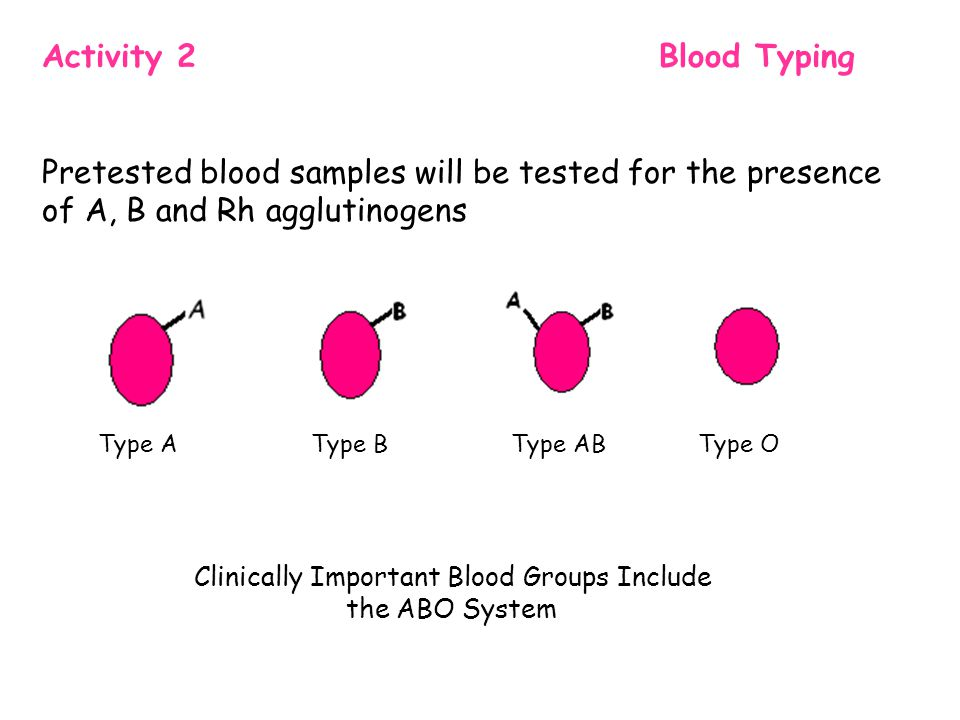 Activity 2 Blood Typing Pretested blood samples will be tested for the presence of A, B and Rh agglutinogens Type A Type B Type AB Type O Clinically Important Blood Groups Include the ABO System