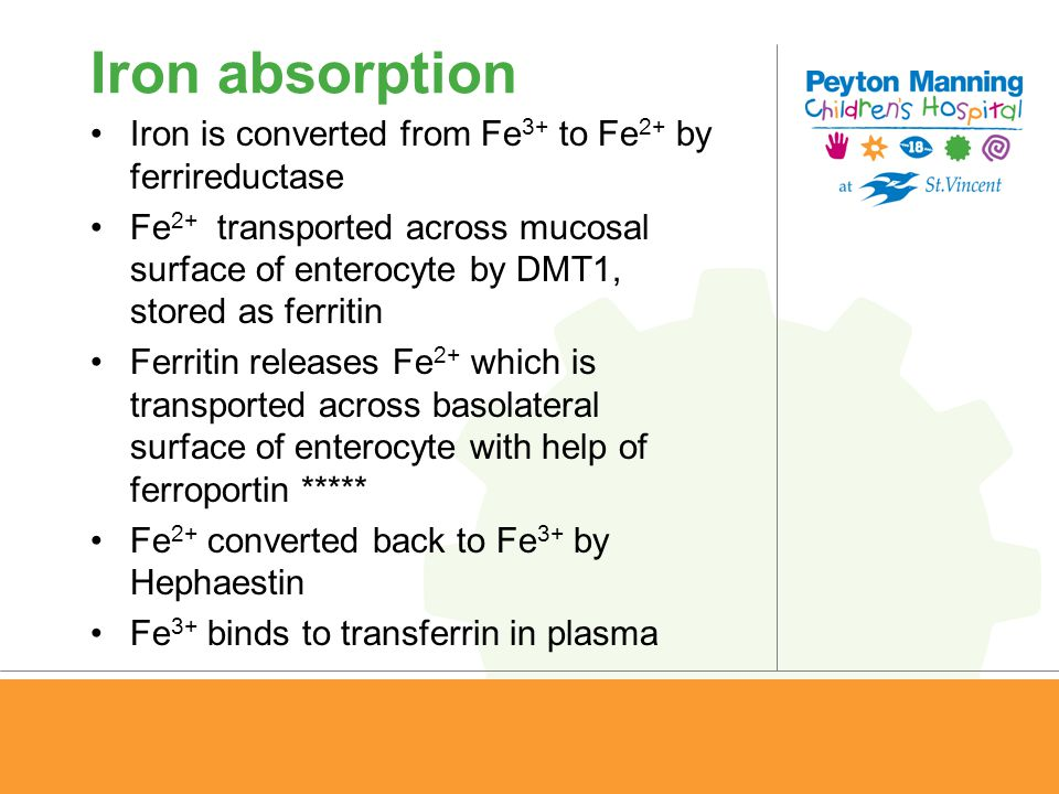 Iron absorption Iron is converted from Fe 3+ to Fe 2+ by ferrireductase Fe 2+ transported across mucosal surface of enterocyte by DMT1, stored as ferr
