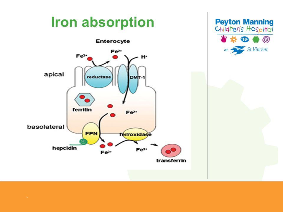 . Iron absorption