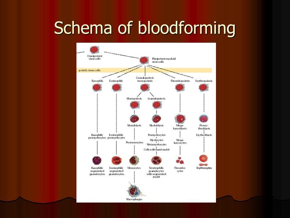 Pernicious anemia – b. marrow Basophilic megaloblastes