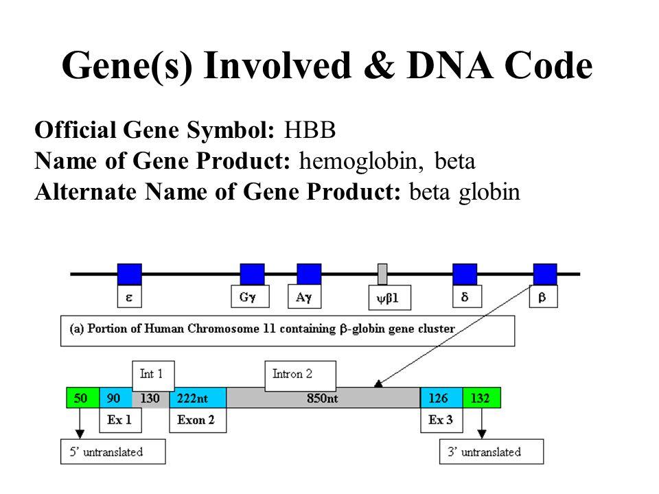 Gene(s) Involved & DNA Code Official Gene Symbol: HBB Name of Gene Product: hemoglobin, beta Alternate Name of Gene Product: beta globin