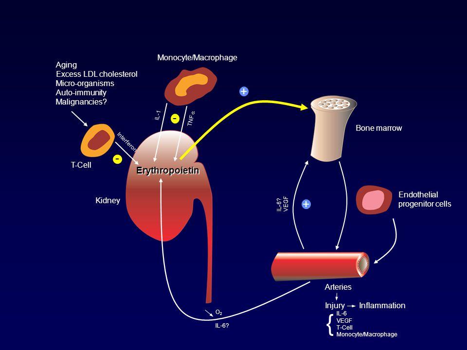 Aging Excess LDL cholesterol Micro-organisms Auto-immunity Malignancies.