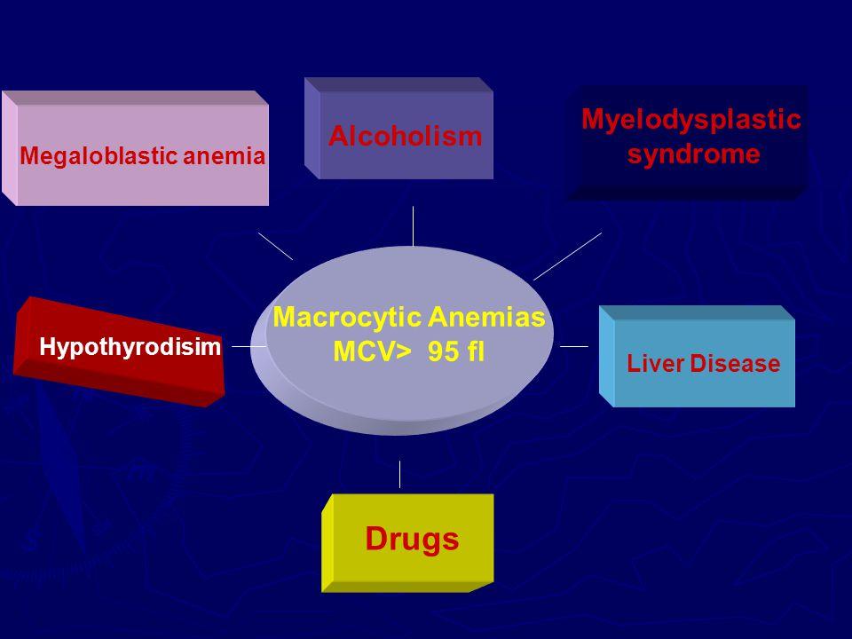 Megaloblastic anemia Hypothyrodisim Liver Disease Drugs Alcoholism Myelodysplastic syndrome Macrocytic Anemias MCV> 95 fl
