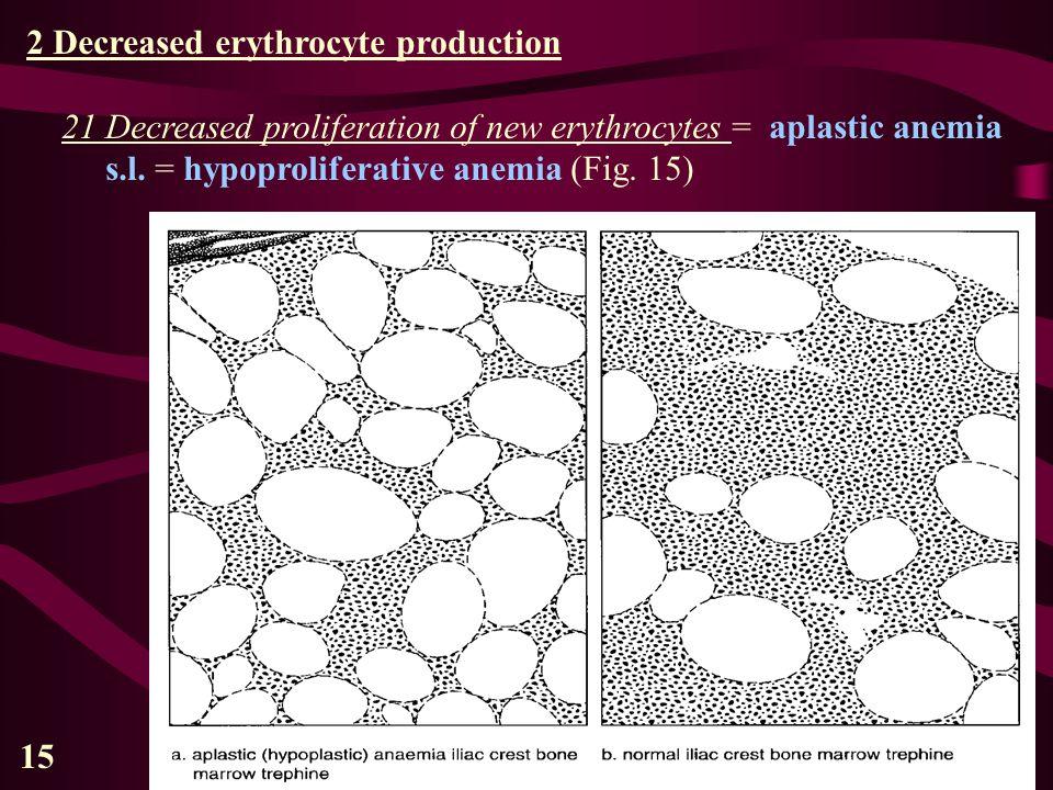 15 2 Decreased erythrocyte production 21 Decreased proliferation of new erythrocytes = aplastic anemia s.l. = hypoproliferative anemia (Fig. 15)