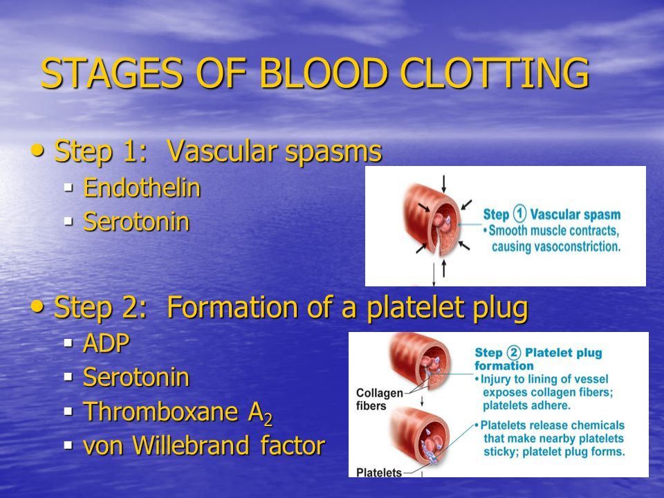 STAGES OF BLOOD CLOTTING Step 1: Vascular spasms Step 1: Vascular spasms  Endothelin  Serotonin Step 2: Formation of a platelet plug Step 2: Formation of a platelet plug  ADP  Serotonin  Thromboxane A 2  von Willebrand factor