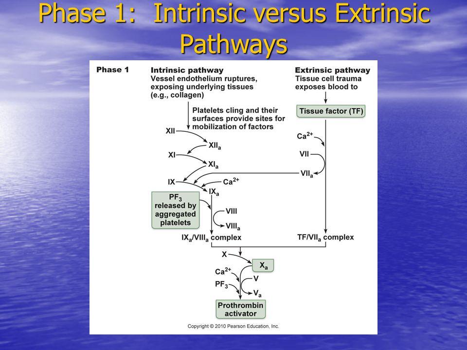 Phase 1: Intrinsic versus Extrinsic Pathways