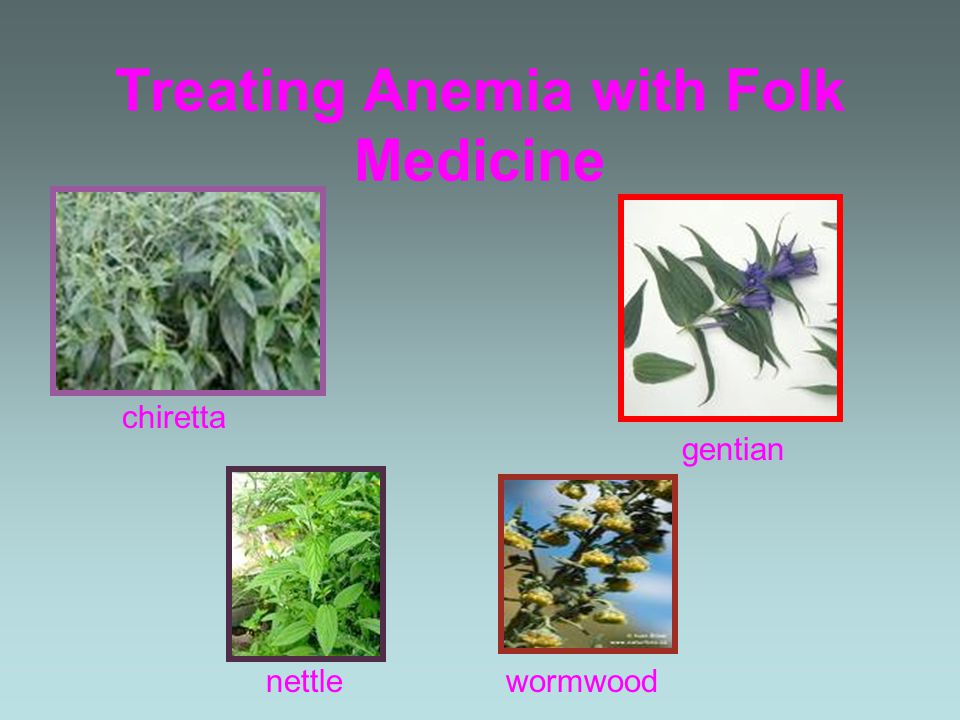 Treating Anemia with Folk Medicine chiretta gentian nettlewormwood