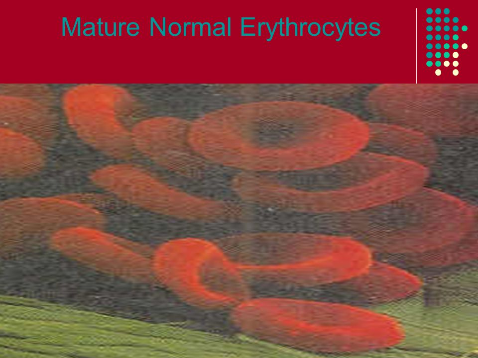Nutrients Needed for Erythrocytes