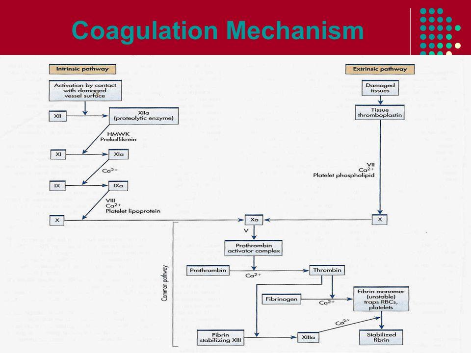Coagulation Mechanism
