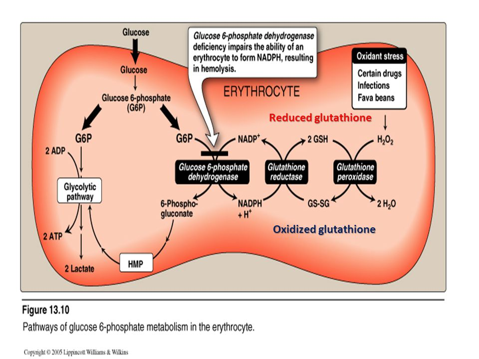 Oxidized glutathione Reduced glutathione