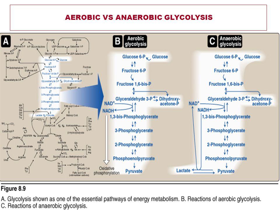 AEROBIC VS ANAEROBIC GLYCOLYSIS