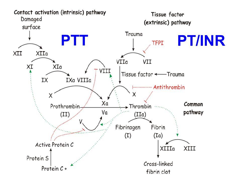 PTT PT/INR