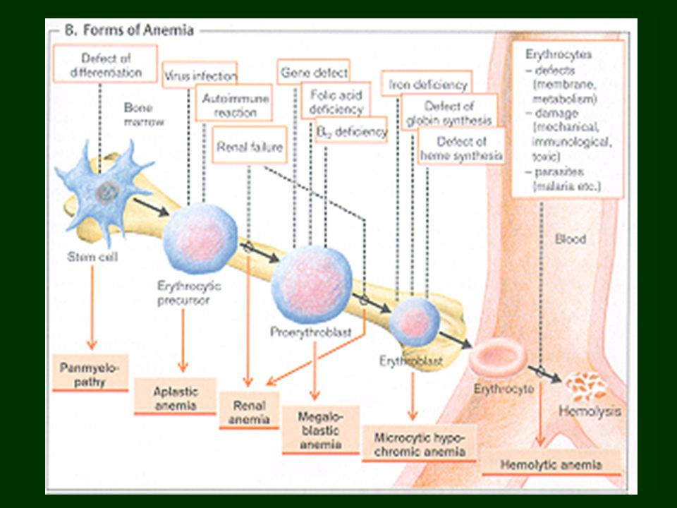 Main disorders of folate absorbtion and metabolism  folate uptake  folate requirement malabsorbtion, e.g.