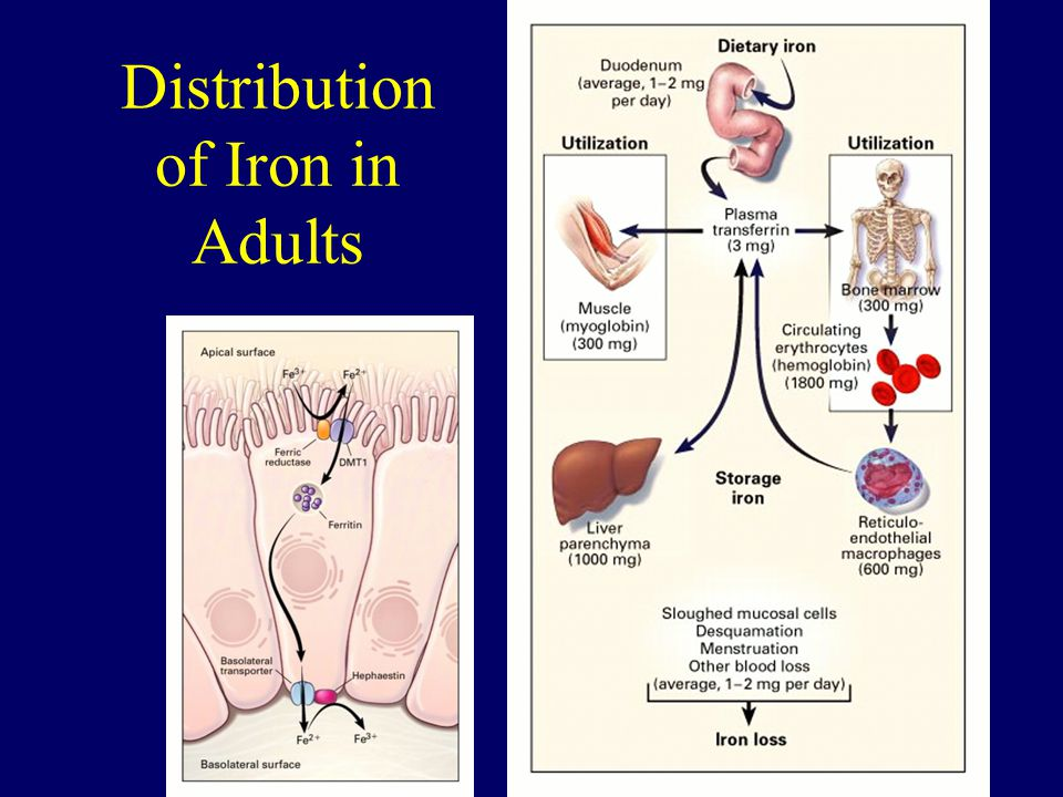 Distribution of Iron in Adults