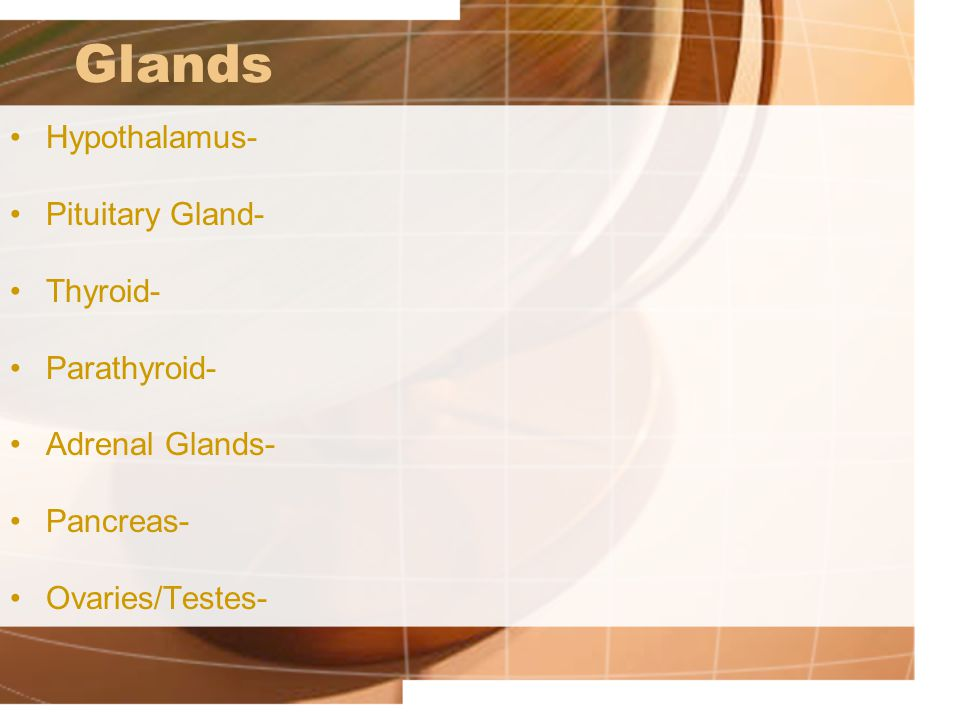 Glands Hypothalamus- Pituitary Gland- Thyroid- Parathyroid- Adrenal Glands- Pancreas- Ovaries/Testes-