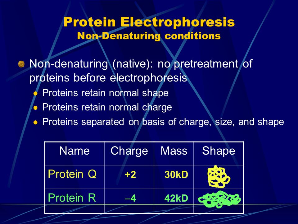 Protein Electrophoresis Non-Denaturing conditions Non-denaturing (native): no pretreatment of proteins before electrophoresis Proteins retain normal shape Proteins retain normal charge Proteins separated on basis of charge, size, and shape NameChargeMassShape Protein Q Protein R +230kD 44 42kD