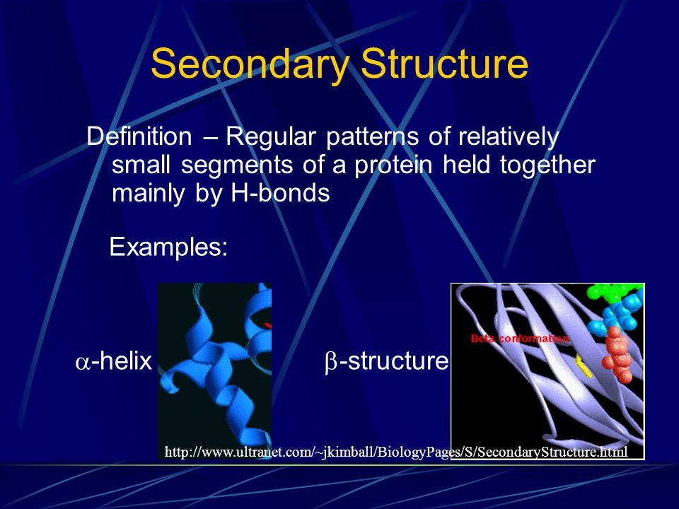 Secondary Structure Definition – Regular patterns of relatively small segments of a protein held together mainly by H-bonds  -helix  -structure http://www.ultranet.com/~jkimball/BiologyPages/S/SecondaryStructure.html Examples:
